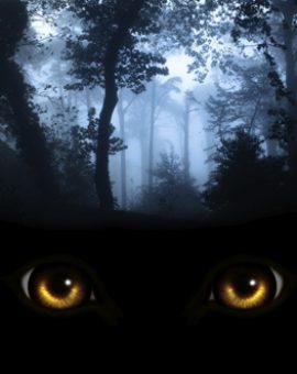 Lurking in the dark